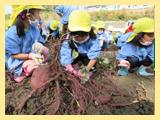 芋掘り・焼き芋大会
